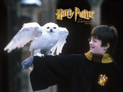 Edwiges e o pequeno Potter