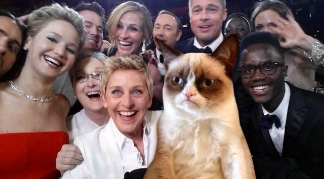 Cat Selfie Meme